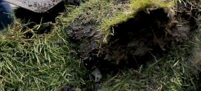 1.Grass.jpeg