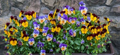 Flowerpots.jpeg