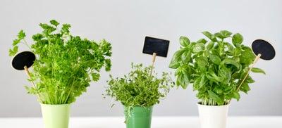 Herbs_in_plant_pot.jpeg