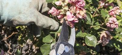 6.Cutting_flowers.jpeg
