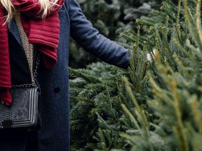 121120-christmas-trees-available-Tier-3.jpeg