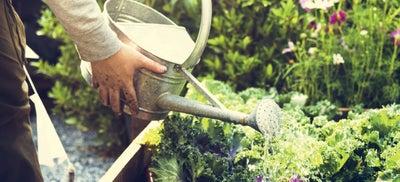 7.Watering_plants.jpeg