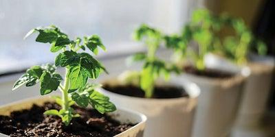 6.Planting_pots.jpeg