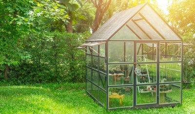 where-to-site-greenhouse.jpg