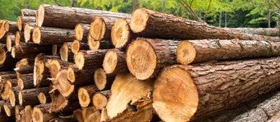 Pile of timber logs