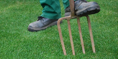19.Maintaining-your-lawn.jpeg