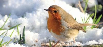 1.Robin-How-To-January.jpeg