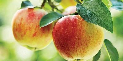 16.Apple_tree.jpeg