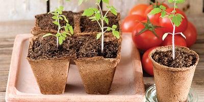 14.Planting_tomatoes.jpeg