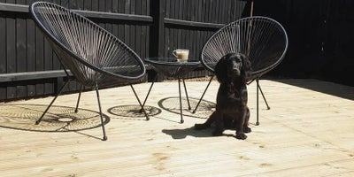 Dog_and_chairs_on_decking