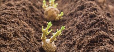 4.Planting.jpeg