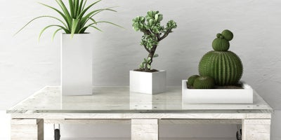 Plant_pots_on_upcycled_furniture.jpeg