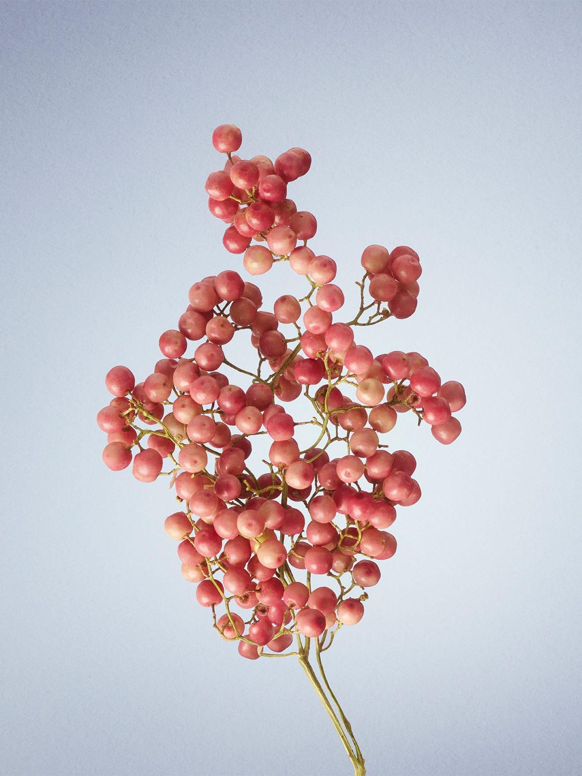 Pink_Pepper.jpg