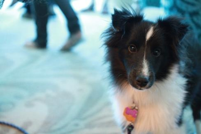 This DEF CON doggie brought all kinds of cuteness to the hacker confab. Who needs cat videos when a pup is onsite?
