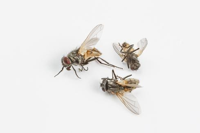 Equifax Executives Drop Like Flies