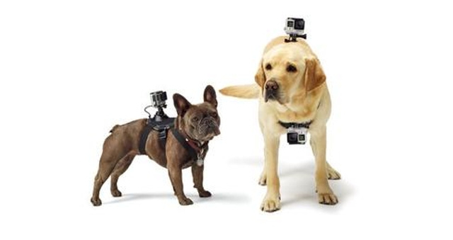 Who Let The Dogs Record?