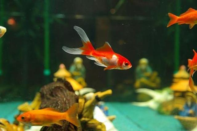 Keep Goldfish Grinning