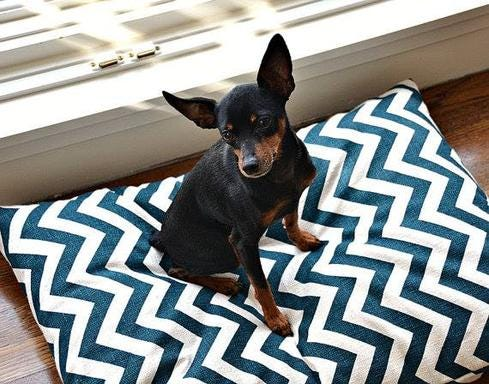 7 Cool Wearables For Pets
