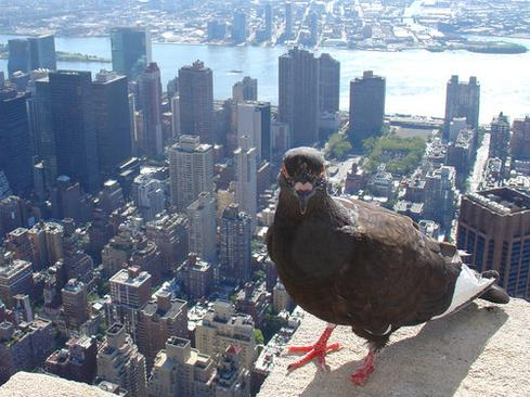 Geek's Guide To NYC Travel: Interop Preview