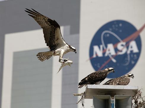 NASA_Ospreys.jpg