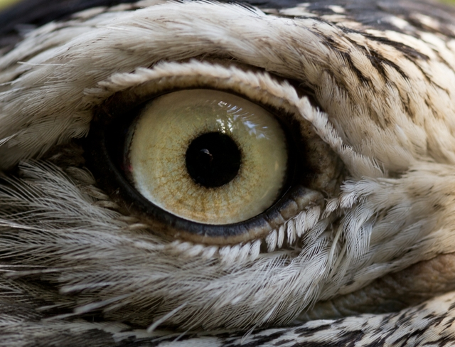 FalconEye: Detecting Windows Process Injection Techniques