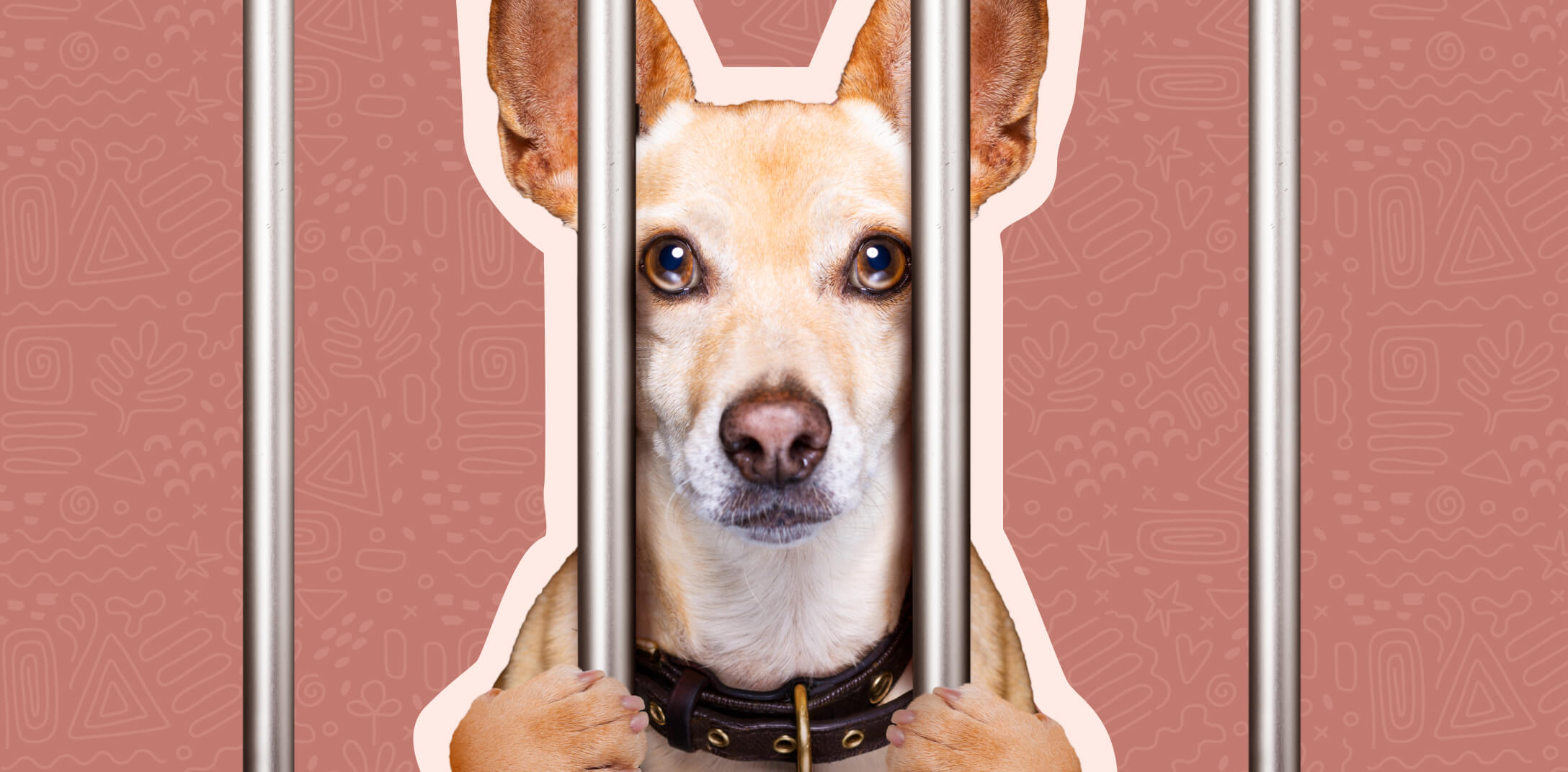A small dog behind the bars