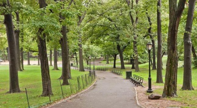 trees-park