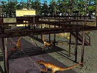 raptors_small.jpg